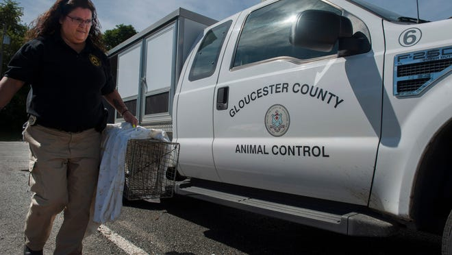 Gloucester County Animal Control Officer Kim Franks carrries a trapped feral cat into the animal shelter. Friday, August 29, 2014.