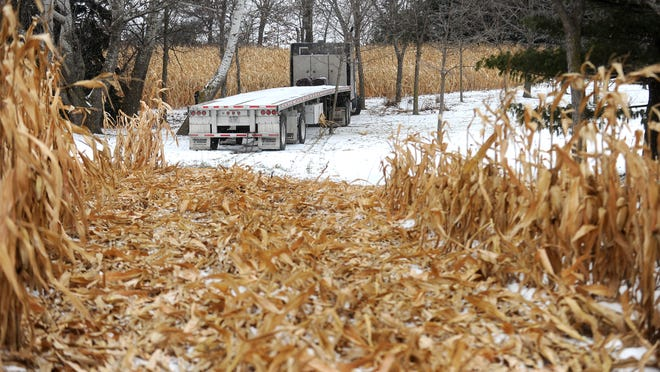 A semi rests against a tree in the backyard of a home on Willowlawn Road after traveling through a cornfield.