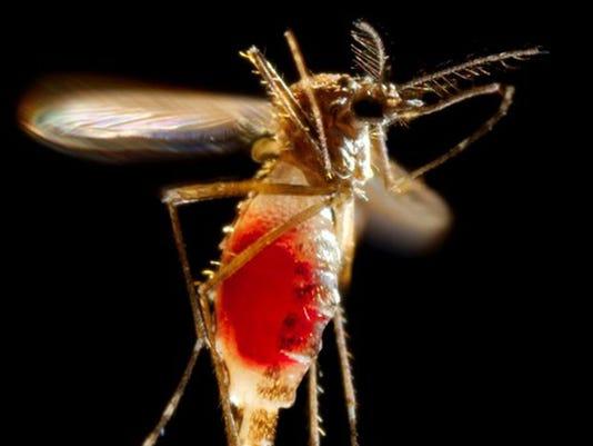 WEB mosquito disease 8