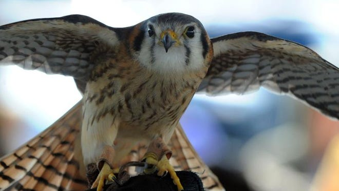 The Wildlife Center of Virginia, the headliner, will present two shows about native critters at Earth Day Staunton from 9 a.m. to noon Saturday in the Wharf, shoulder to shoulder with the farmers market.