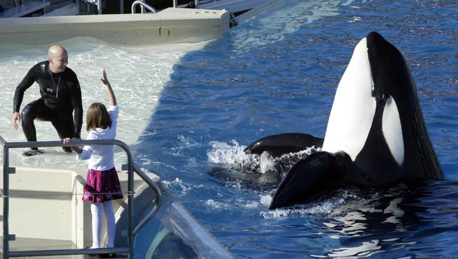 In this Nov. 26, 2006, file photo, SeaWorld Adventure Park trainer Ken Peters, left, looks to a killer whale during a performance at Shamu Stadium inside the theme park in San Diego. SeaWorld San Diego is ending its controversial and long-running killer whale show. The show that featured orcas cavorting with trainers and leaping high out of a pool ends Sunday.