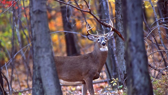 The deer are out in November