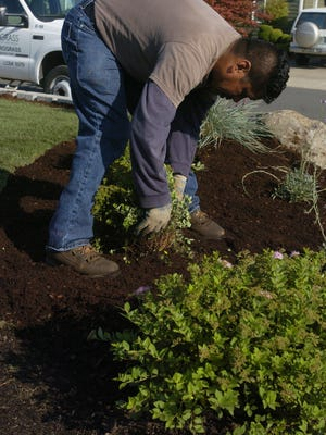 If the soil is dry enough, mulch around the base of plants to keep weeds at bay and summer moisture in.