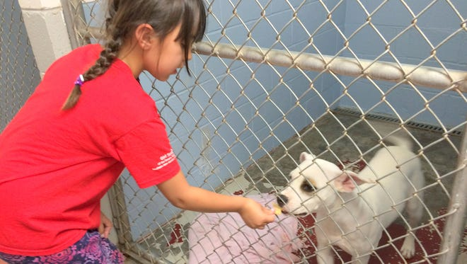 Ella Bertaloni of Girl Scouts of the Desert Southwest feeds one of the dogs at the High Desert Humane Society a homemade treat.