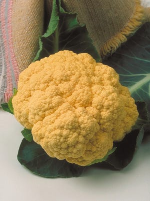 A genetic mutation resulted in 'Cheddar' cauliflower.