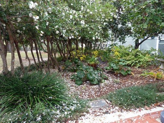 Nasturtium garden at TGC_12-8-16 (2).