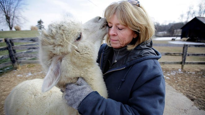 Linda Salsbury gets some love from Beloved, or Lover Boy, as they refer to the alpaca born on Salsbury's daughter's birthday.