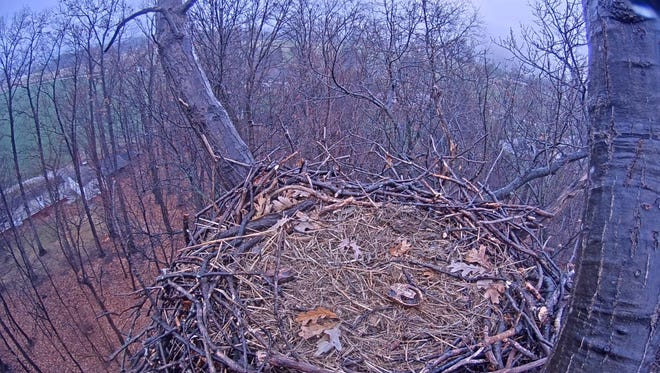 A bald eagle nest sits empty, except for two turtle shells, on Dec. 17, the first day of the Pennsylvania Game Commission's 2015-2016 livestream.
