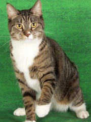 Stella is available for adoption  at 952 W. Melody