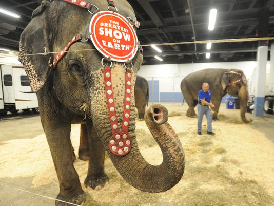 Circus elephant in Asheville (1).jpg