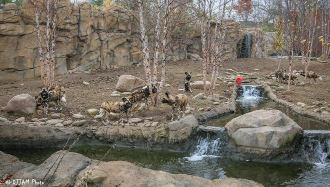 The Painted Dog Valley exhibit at the Cincinnati Zoo has earned a Living Building Challenge (LBC) certification.