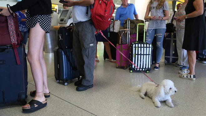 A dog named Jazzy waits in line with Delta Air Lines passengers at a ticket counter in Newark Liberty International Airport in Newark, N.J., on Aug. 8, 2016. The airline announced new rules Jan. 19, 2018, dealing with animals flying with passengers as service or emotional-support animals.