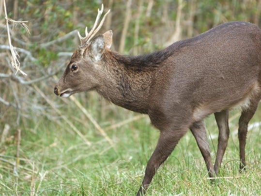 Del man pleads guilty to illegal deer hunting for Dnrec fishing report