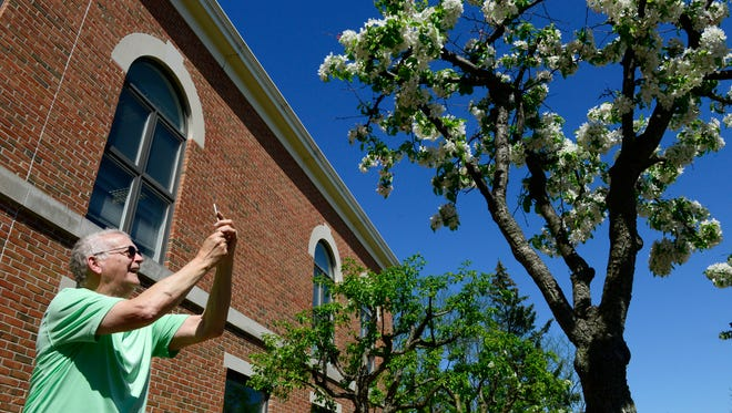 Karl Nunley of Fremont photographs flowers on a tree at the Birchard Library.