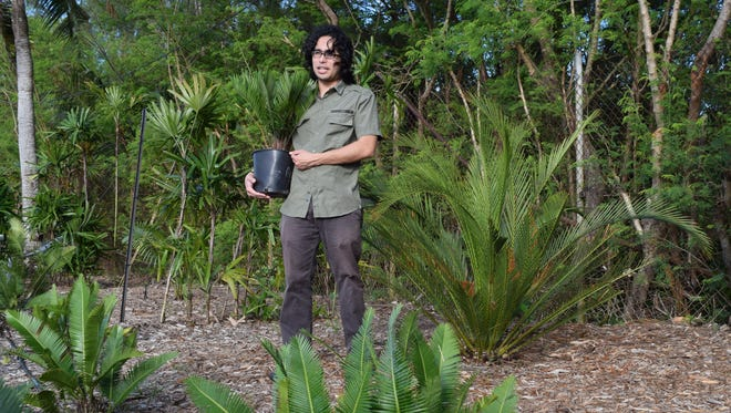 Benjamin Deloso discusses use of cycads in UOG's cycad garden. The cycad in the foreground is from Mexico, the large cycad in the background is from Australia, and the containerized cycad that Deloso holds is from Florida. Plants will be available for purchase at an upcoming UOG workshop.