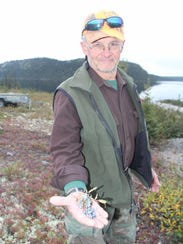 Bill Smith of Shell Lake, Wis., holds blueberries picked