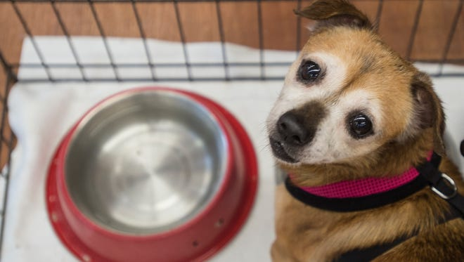 A dog at HELP the Animals pet shelter, 2101 W. Main St., is seen Friday, June 23, 2017.