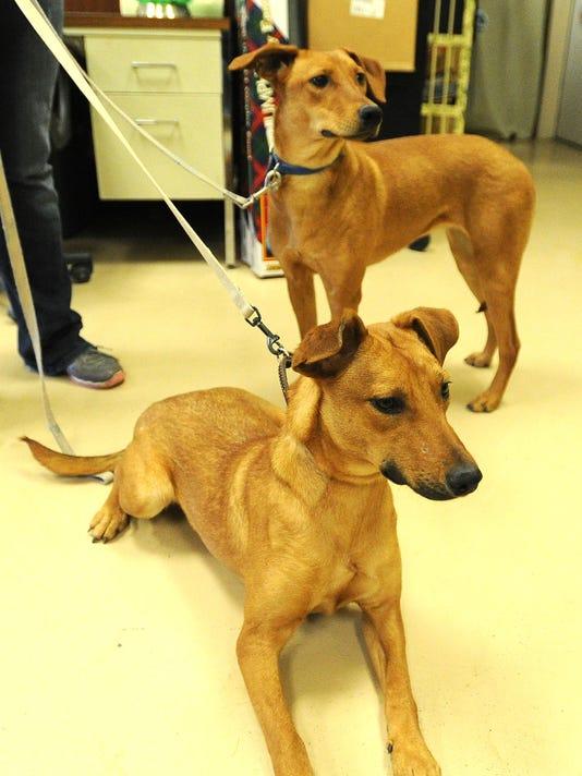 FON 010215 dog rescue 4.jpg