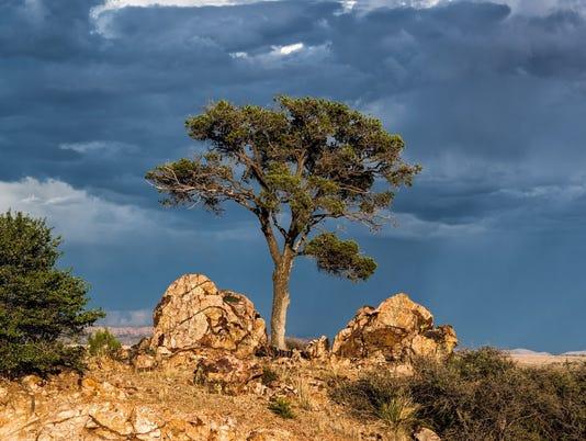 635831896396183790-tree-rock