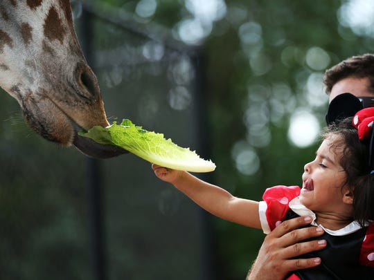 Carlos Burguillo of Naples holds his daughter Sofia, 2, as she feeds a giraffe during Boo at the Zoo in Naples on Sunday, Oct. 25, 2015.