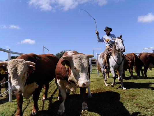 636367841249838183-cattle.jpg