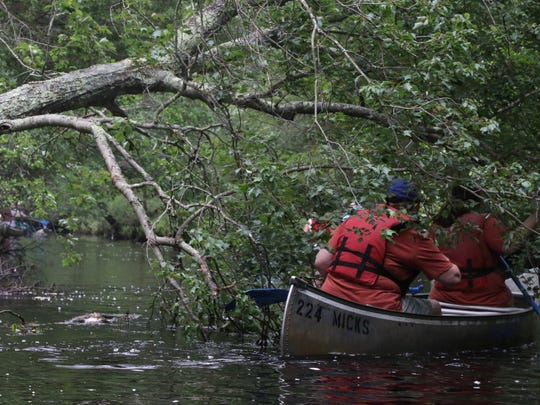 Fallen trees create obstacles for the canoes and kayaks