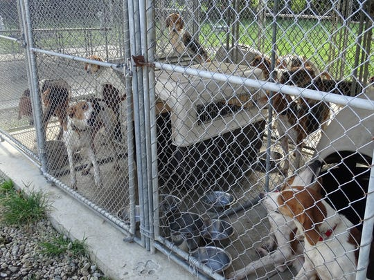 Dogs taken from a Ross County home Wednesday are being housed two per kennel at the Ross County Humane Society due to space and availability of dog houses.