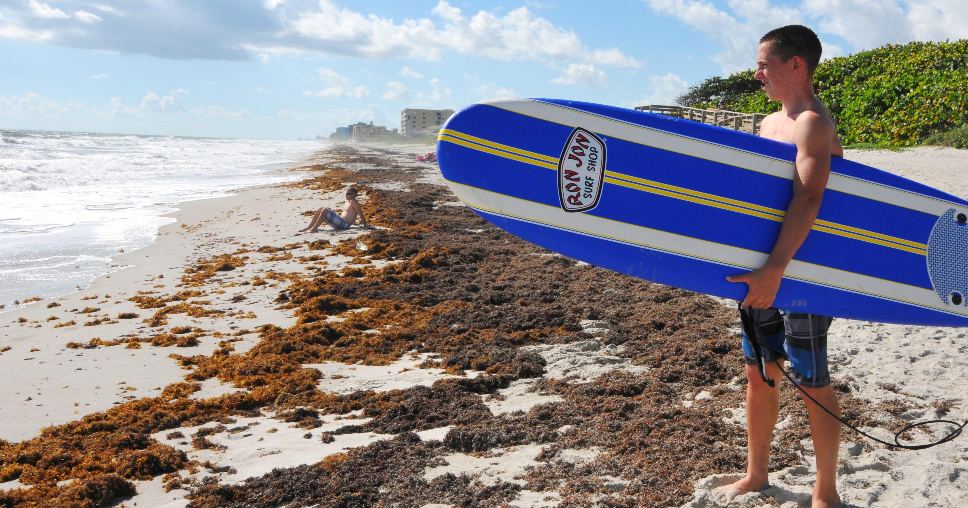 Seaweed keeps blanketing Brevard beaches