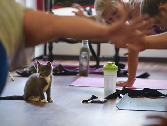 A kitten wanders the floor during a kitten yoga session