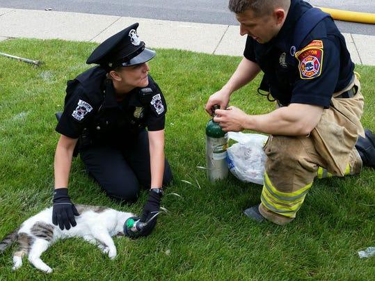 cnt fire kills cat