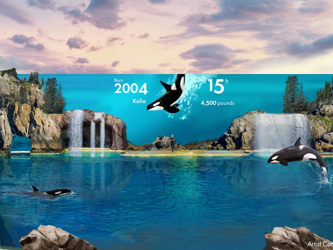 Incidents At Seaworld Parks: SeaWorld's New Rides And Attractions Coming In 2017
