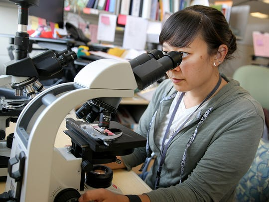 Dayna Katula uses a microscope to search for species that produce toxins in shellfish.