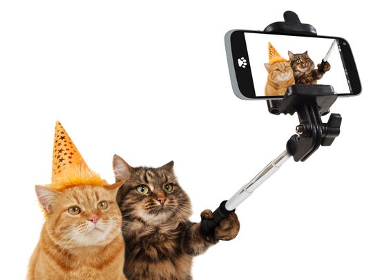 Celebrate our feline friends at the Oregon Cat Video Festival 4 to 10 p.m. Saturday, March 11, at the Oregon State Fairgrounds.