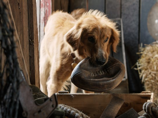 The dog Bailey in the film 'A Dog's Purpose.'