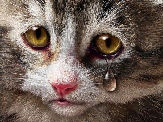 animal_abuse.jpg