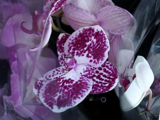 Orchid plants are among the flowers and plants for sale at Produce Junction.