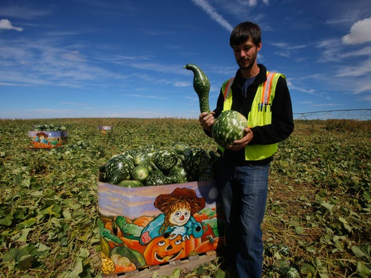 Pumpkin Patch Fundraisers co-owner John Hamby displays a speckled swan gourd Wednesday at a Navajo Agricultural Products Industry farm south of Farmington.