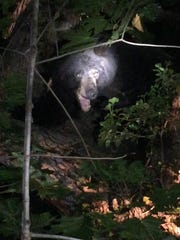 A black bear was spotted around 1:30 a.m. Tuesday around