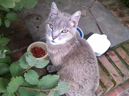 Rutger, the 21-year-old cat who lived at Rutgers Gardens,