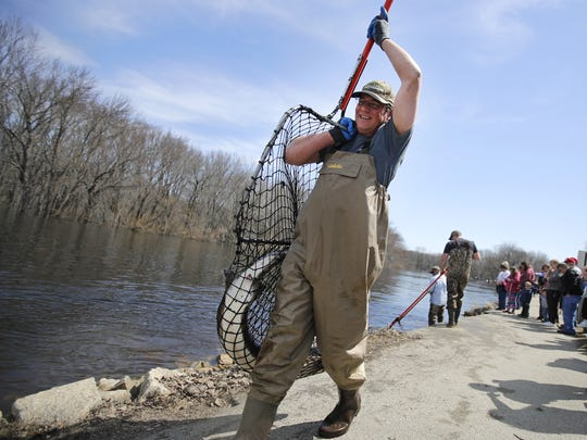 Eric Wegleitner, a sturgeon habitat coordinator with the Wisconsin Department of Natural Resources, carries a sturgeon to the measuring and tagging area Monday along the Wolf River Sturgeon Trail  in the town of Mukwa.