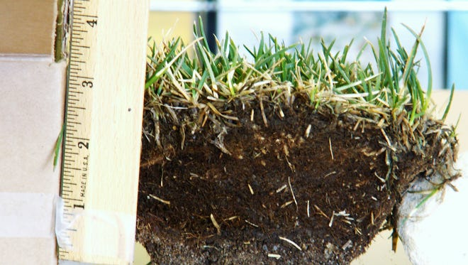 If a lawn sample reveals a thick layer of plant matter with little soil, thatch may be the problem. Aeration can help.