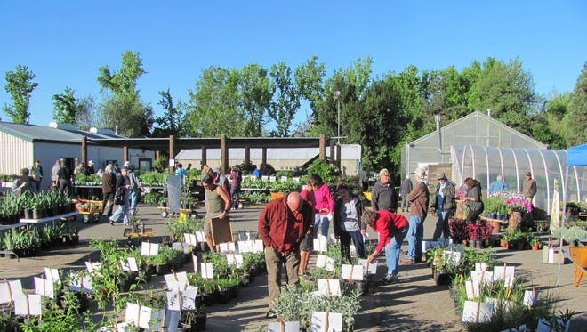 File photo - A Shasta College plant sale is seen in this 2017 photo.