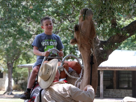 Sterling City elementary student Cason McCrea watches as Cinco the camel snacks on the leaves during a ride while at the Sterling City Outdoor Education Program, an outdoor camp, Tuesday, September 5, 2017.