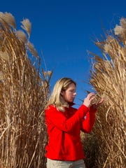 Emily Heaton, assistant professor of agronomy at Iowa State University, researches the use of miscanthus and switchgrass in the United States to create energy. Research indicates miscanthus could produce 250 percent more ethanol than corn, without requiring additional land.