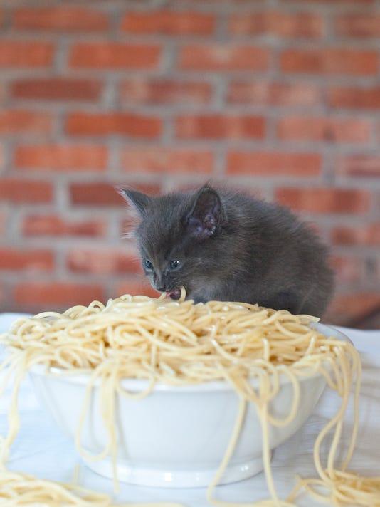 1 Spay-ghetti Kitten