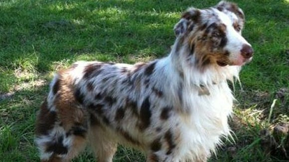 Lost dog Breaker