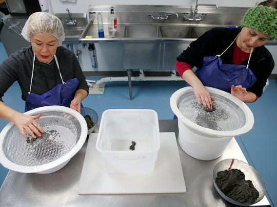 Renee Koerner, left, and Megan Groves, screen caviar at Big Fish Farms in Bethel Wednesday January 30, 2017.. Ten years ago Koerner founded Big Fish Farms that produces farm-raised paddlefish products. The company sells caviar and the meat to local markets.