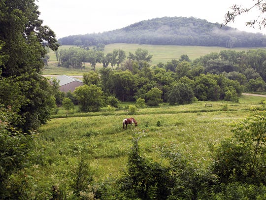 A horse grazes in a field at the Kickapoo Valley Ranch