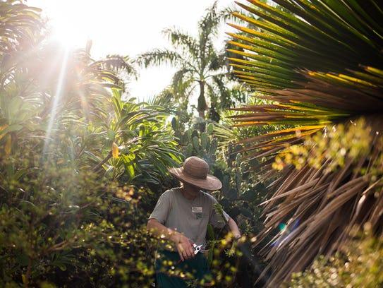 Plant records coordinator Sandra Rigotti-Santos identifies,