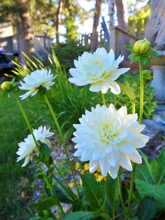 WDH Garden of the Month 12